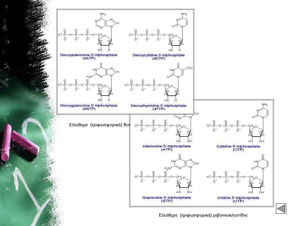 Ελεύθερα (τριφωσφορικά) ριβονουκλεοτίδια