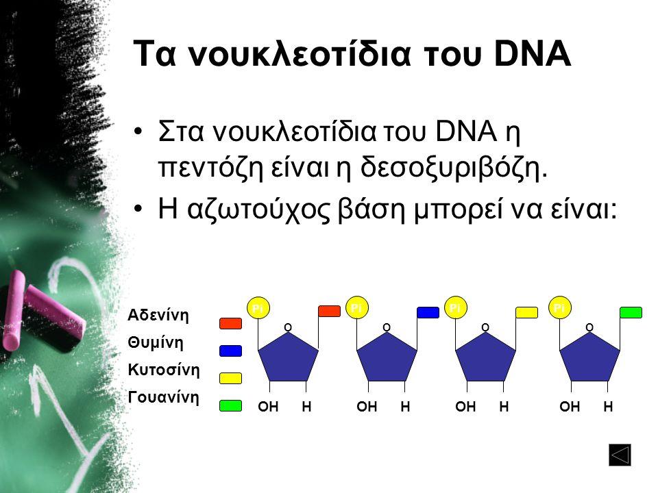 Τα νουκλεοτίδια του DNA