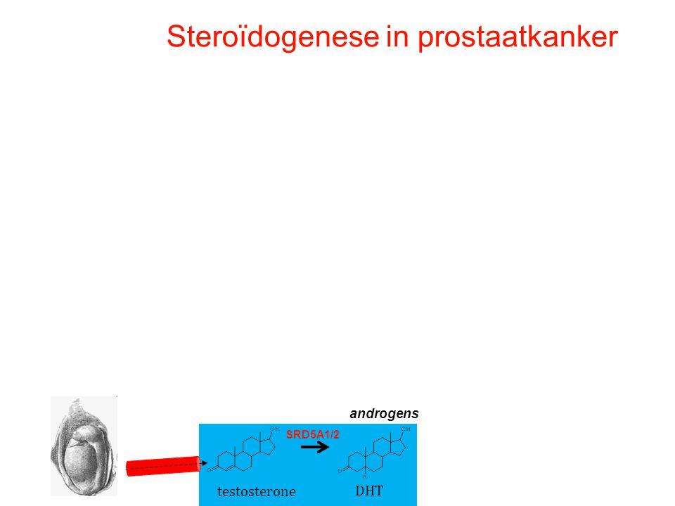 Steroïdogenese in prostaatkanker