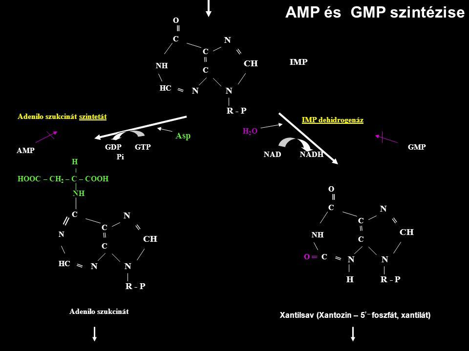 AMP és GMP szintézise ═ = = = N = CH IMP N N R - P Asp N N = CH = CH