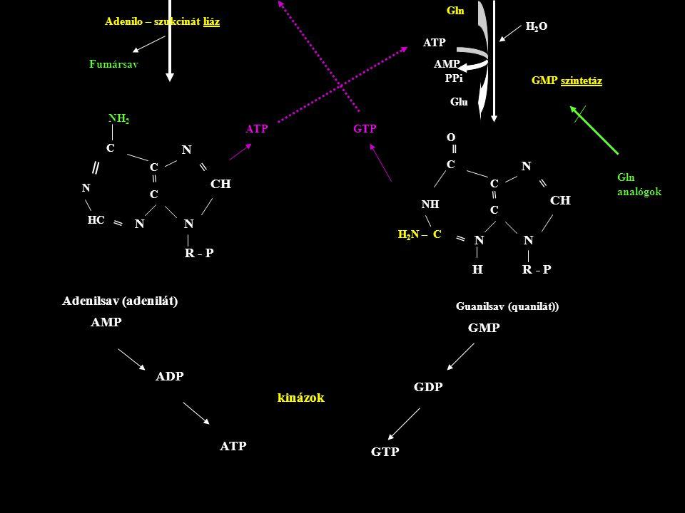 ═ = = N N = CH = CH N N N N R - P H R - P Adenilsav (adenilát) AMP GMP