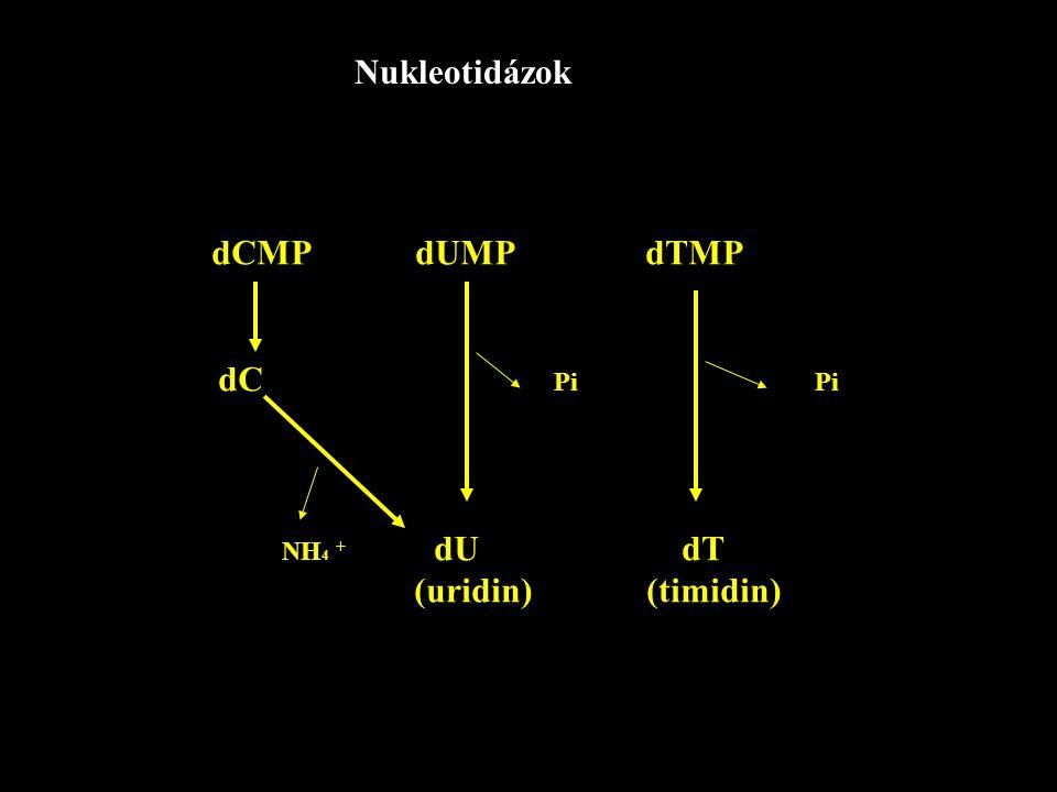 Nukleotidázok dCMP dUMP dTMP. dC Pi Pi.
