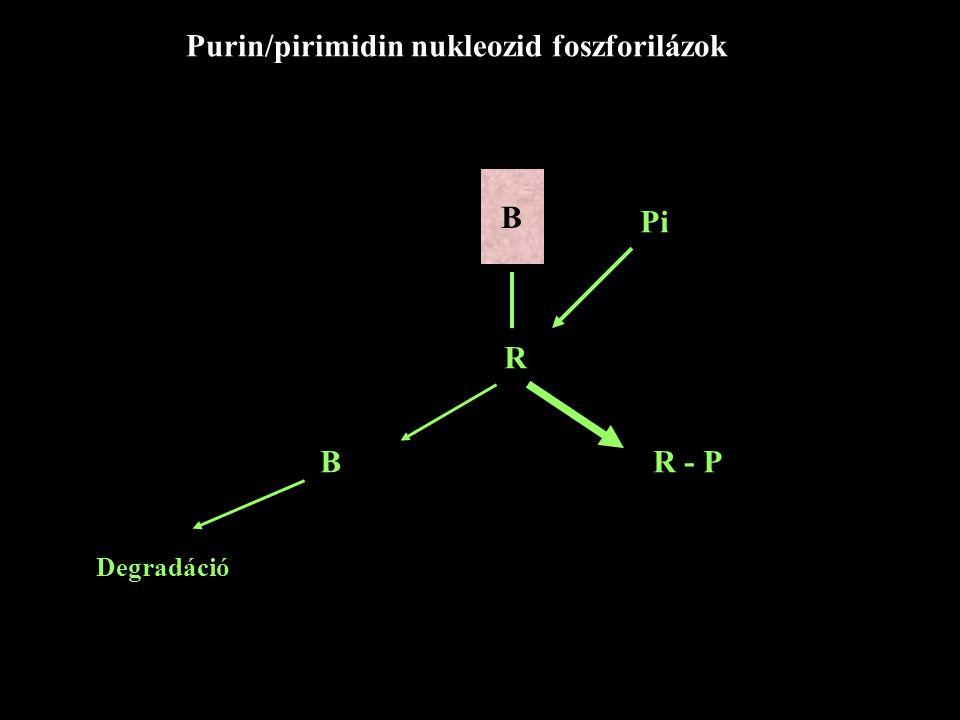 Purin/pirimidin nukleozid foszforilázok