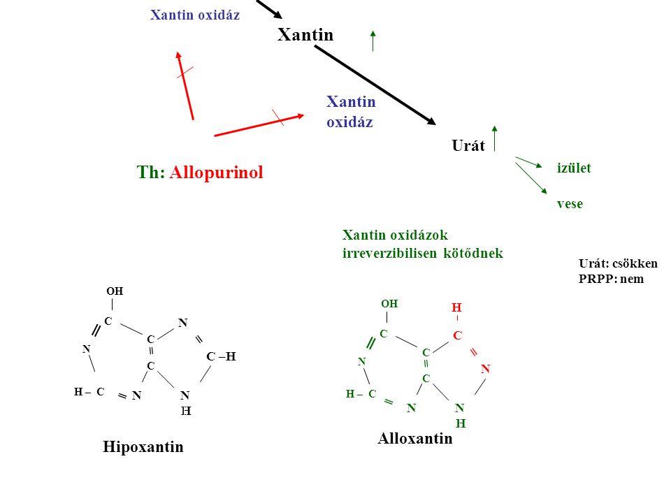 Xantin Th: Allopurinol Xantin oxidáz Urát ═ ═ Alloxantin Hipoxantin