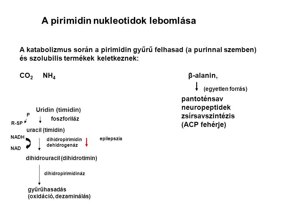 A pirimidin nukleotidok lebomlása
