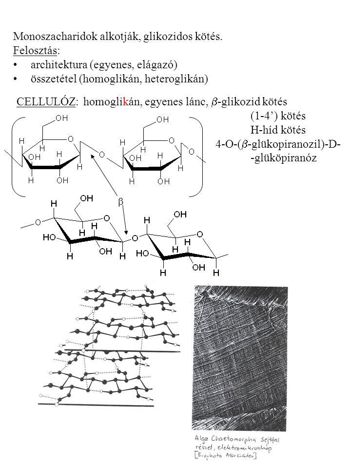 Monoszacharidok alkotják, glikozidos kötés. Felosztás: