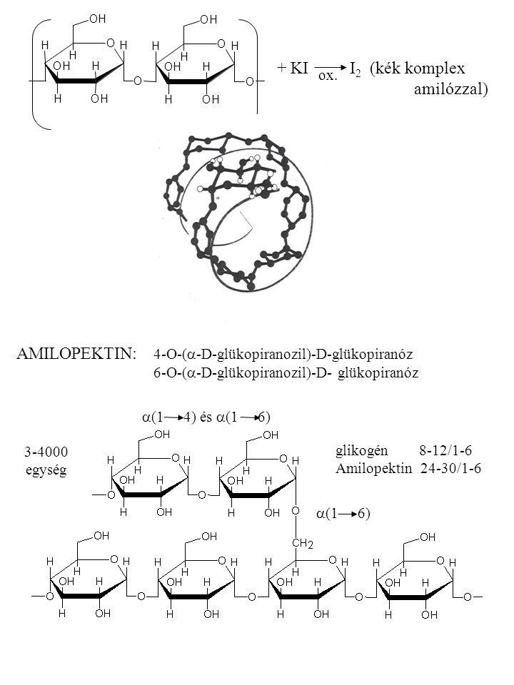 + KI I2 (kék komplex amilózzal)