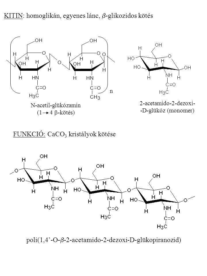2-acetamido-2-dezoxi- -D-glükóz (monomer)