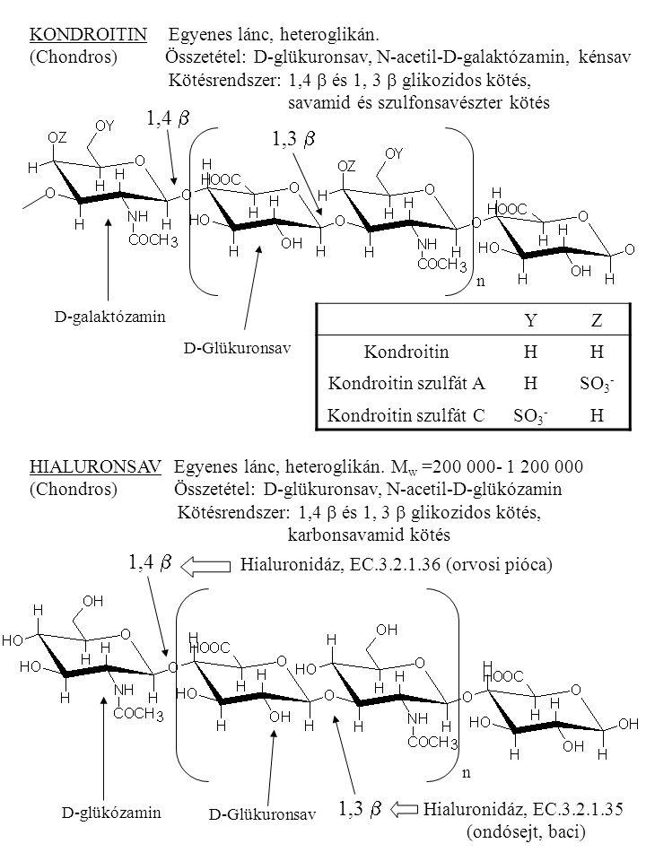 Hialuronidáz, EC.3.2.1.35 (ondósejt, baci)
