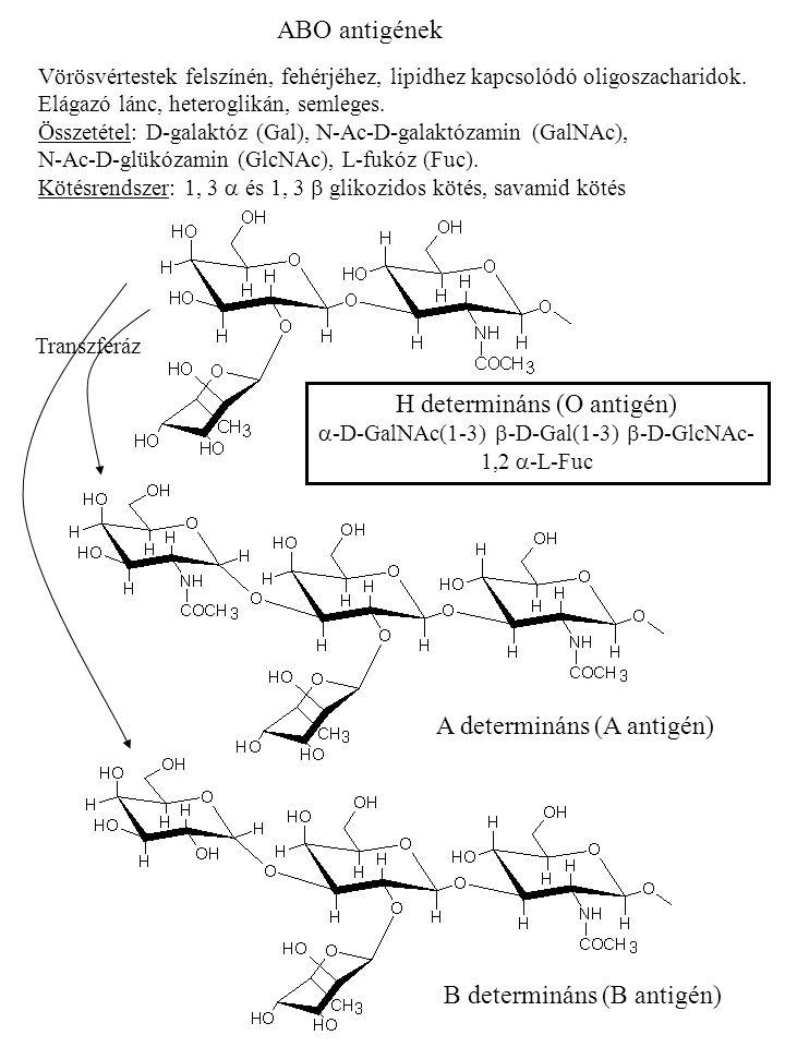 A determináns (A antigén)