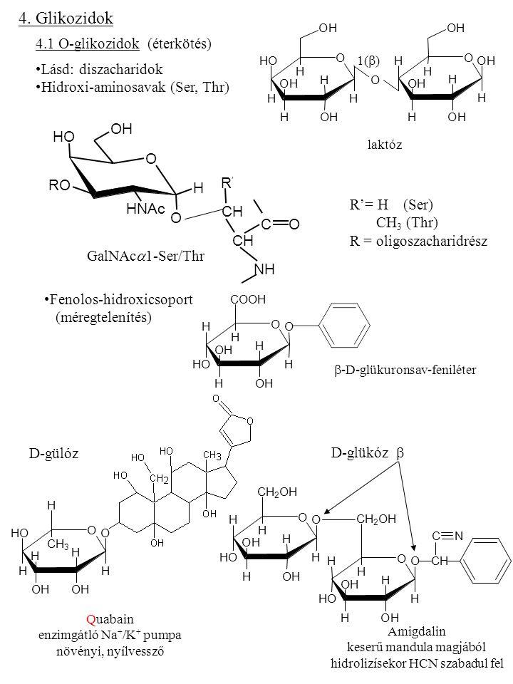 4. Glikozidok 4.1 O-glikozidok (éterkötés) Lásd: diszacharidok