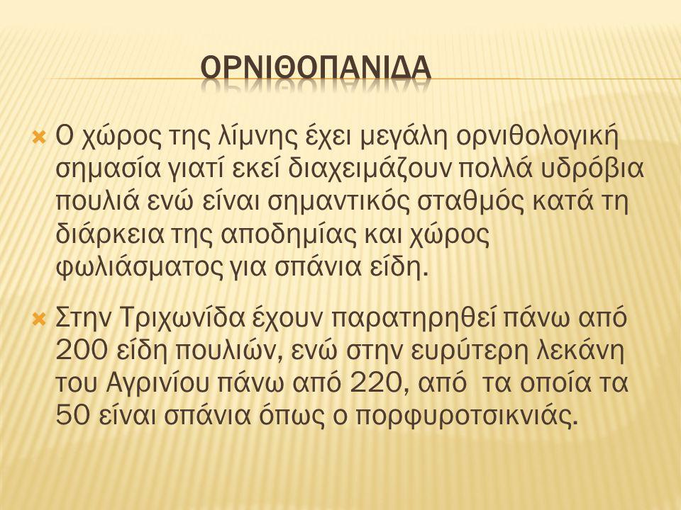 ορνιθοπανιδα