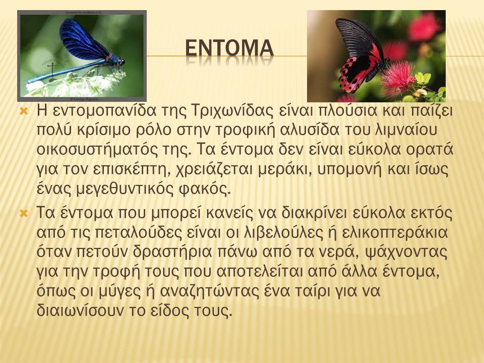 εντομΑ