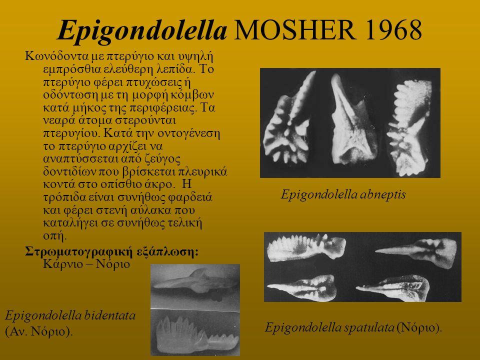 Epigondolella MOSHER 1968
