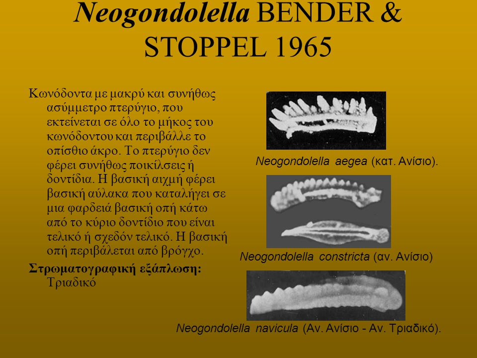 Neogondolella BENDER & STOPPEL 1965
