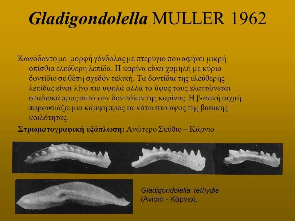 Gladigondolella MULLER 1962