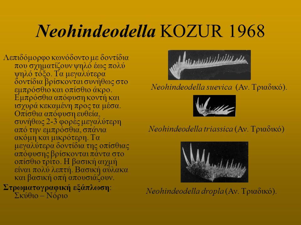 Neohindeodella KOZUR 1968