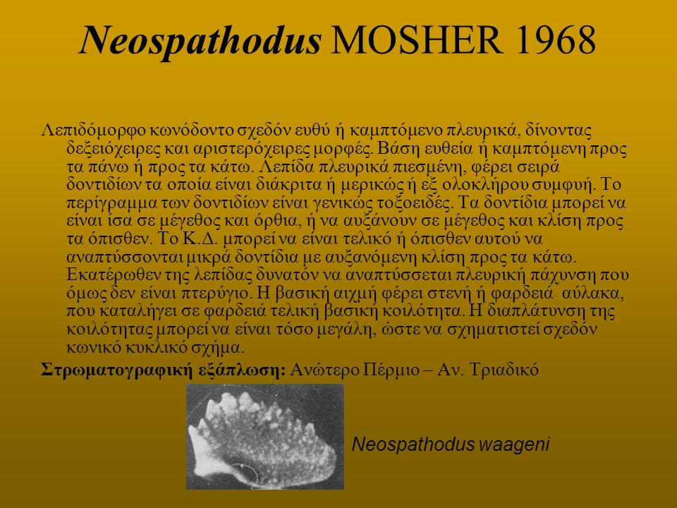 Neospathodus MOSHER 1968