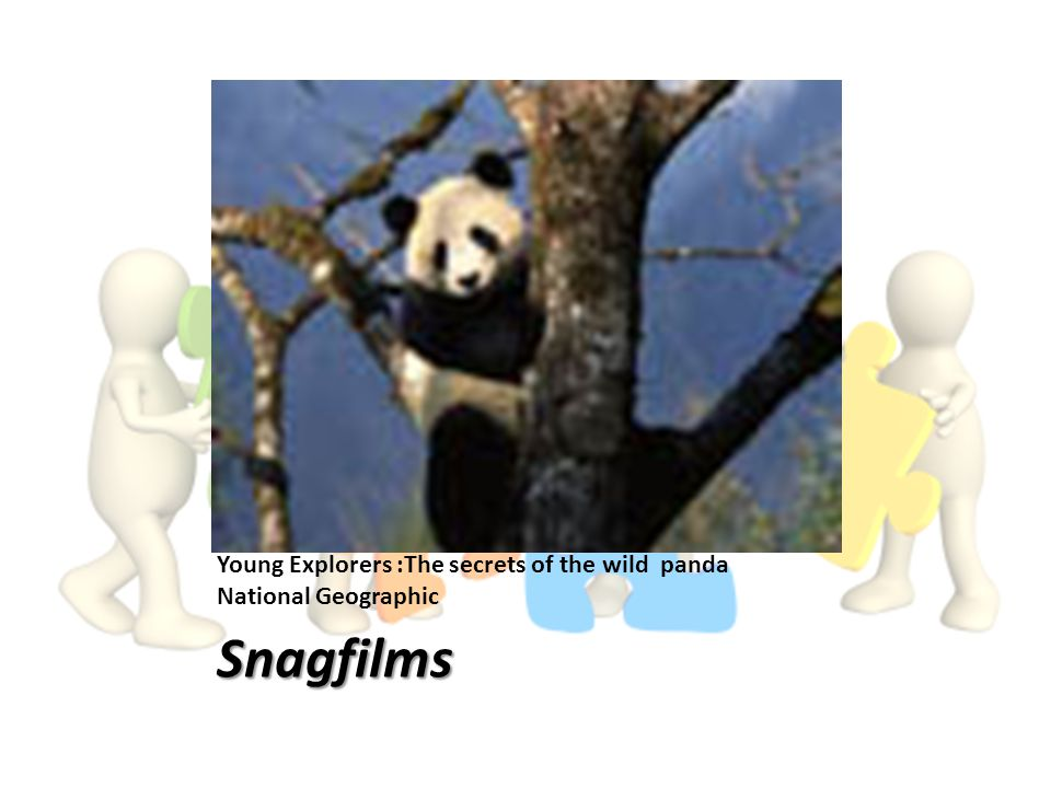 National Geographic Channel Young Explorers :The secrets of the wild panda National Geographic