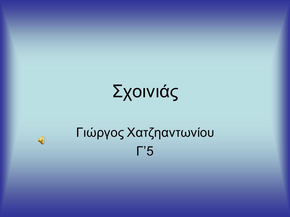 Γιώργος Χατζηαντωνίου Γ'5