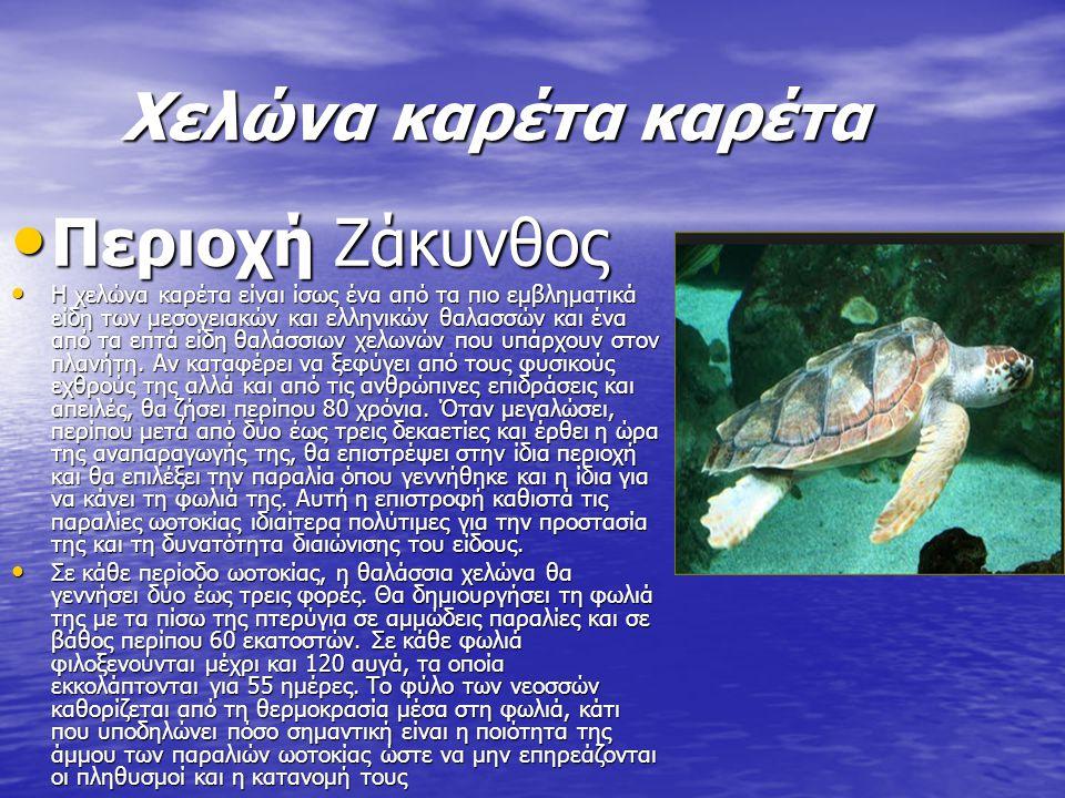 Χελώνα καρέτα καρέτα Περιοχή Ζάκυνθος