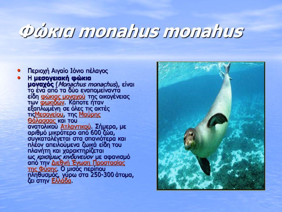 Φώκια monahus monahus Περιοχή Αιγαίο Ιόνιο πέλαγος