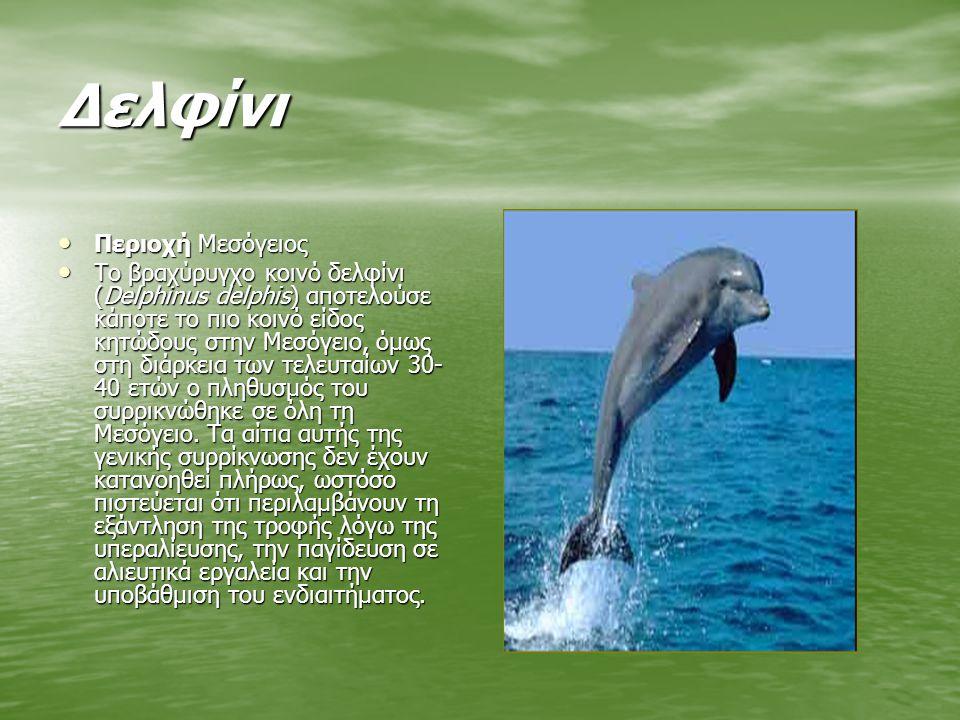 Δελφίνι Περιοχή Μεσόγειος