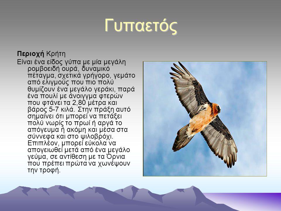 Γυπαετός Περιοχή Κρήτη