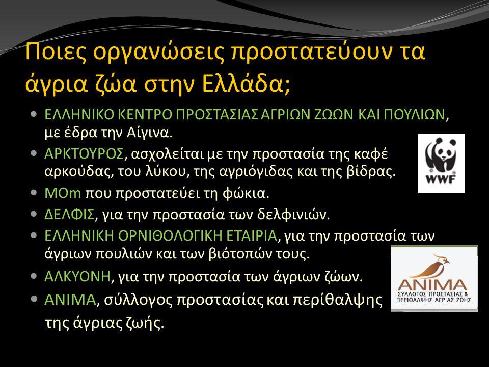 Ποιες οργανώσεις προστατεύουν τα άγρια ζώα στην Ελλάδα;