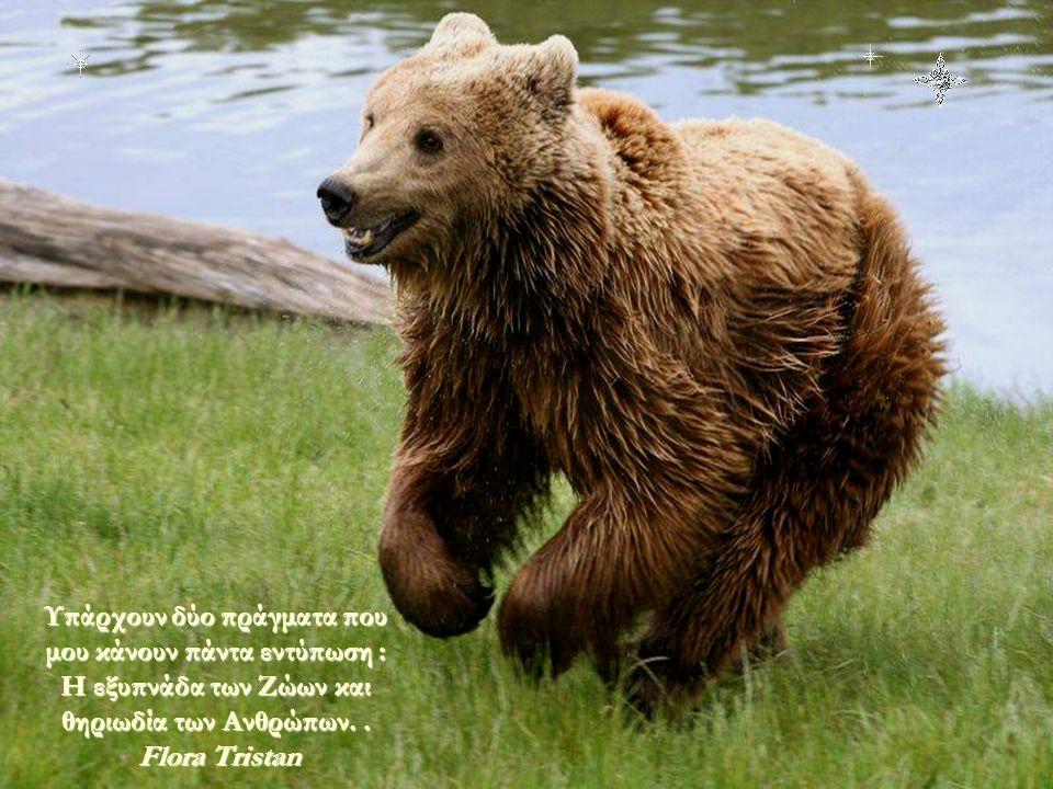 Υπάρχουν δύο πράγματα που μου κάνουν πάντα εντύπωση : Η εξυπνάδα των Ζώων και θηριωδία των Ανθρώπων. .