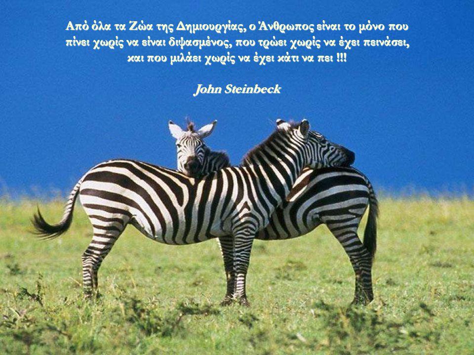 Από όλα τα Ζώα της Δημιουργίας, ο Άνθρωπος είναι το μόνο που πίνει χωρίς να είναι διψασμένος, που τρώει χωρίς να έχει πεινάσει, και που μιλάει χωρίς να έχει κάτι να πει !!!