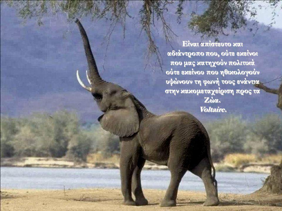 Είναι απίστευτο και αδιάντροπο που, ούτε εκείνοι που μας κατηχούν πολιτικά ούτε εκείνου που ηθικολογούν υψώνουν τη φωνή τους ενάντια στην κακομεταχείριση προς τα Ζώα.