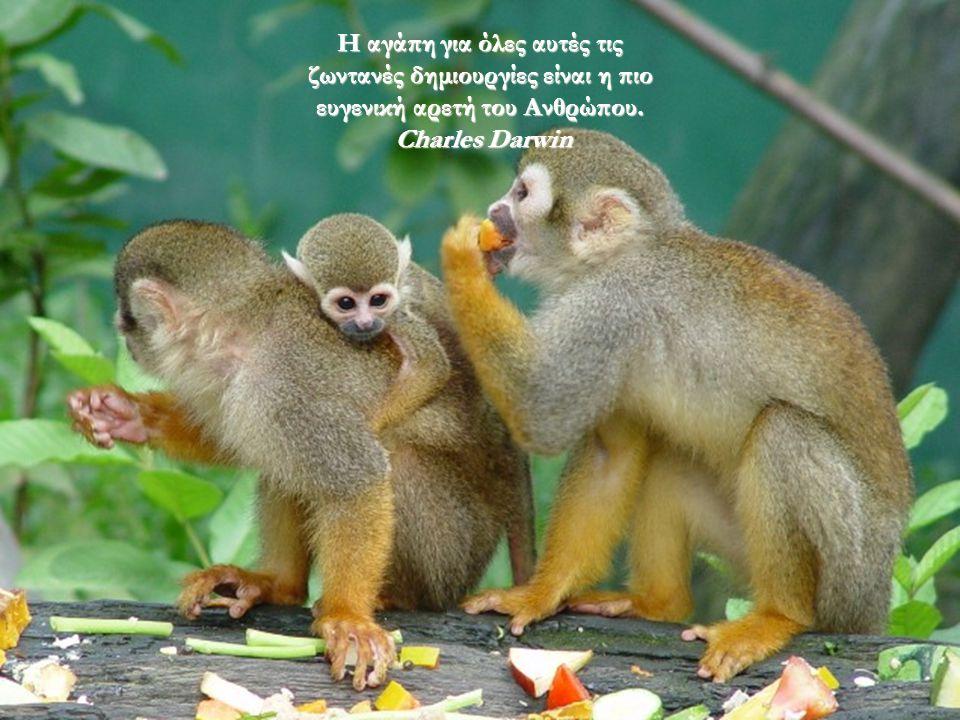 Η αγάπη για όλες αυτές τις ζωντανές δημιουργίες είναι η πιο ευγενική αρετή του Ανθρώπου.