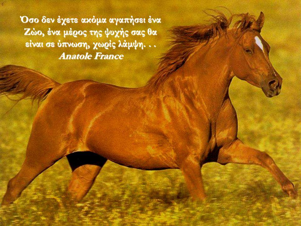 Όσο δεν έχετε ακόμα αγαπήσει ένα Ζώο, ένα μέρος της ψυχής σας θα είναι σε ύπνωση, χωρίς λάμψη. . .