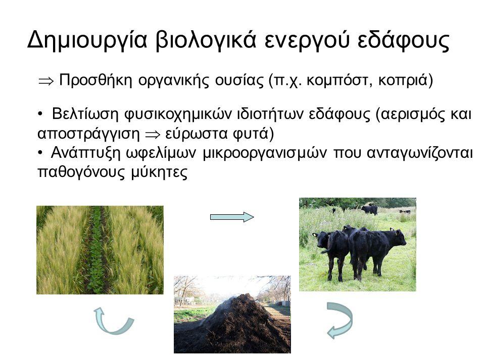 Δημιουργία βιολογικά ενεργού εδάφους