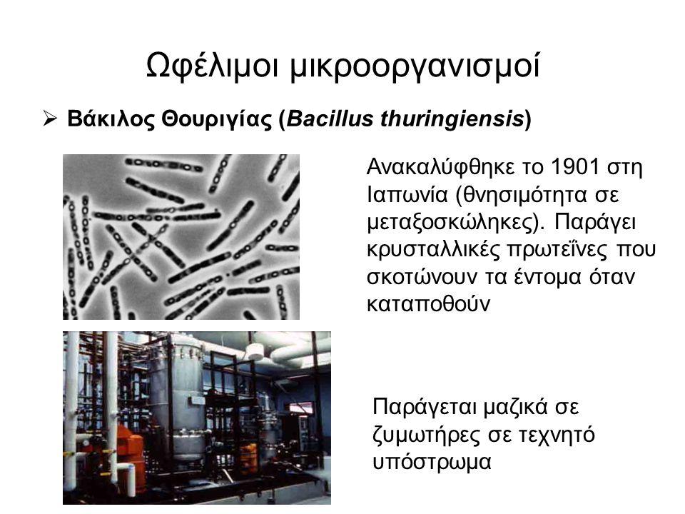 Ωφέλιμοι μικροοργανισμοί