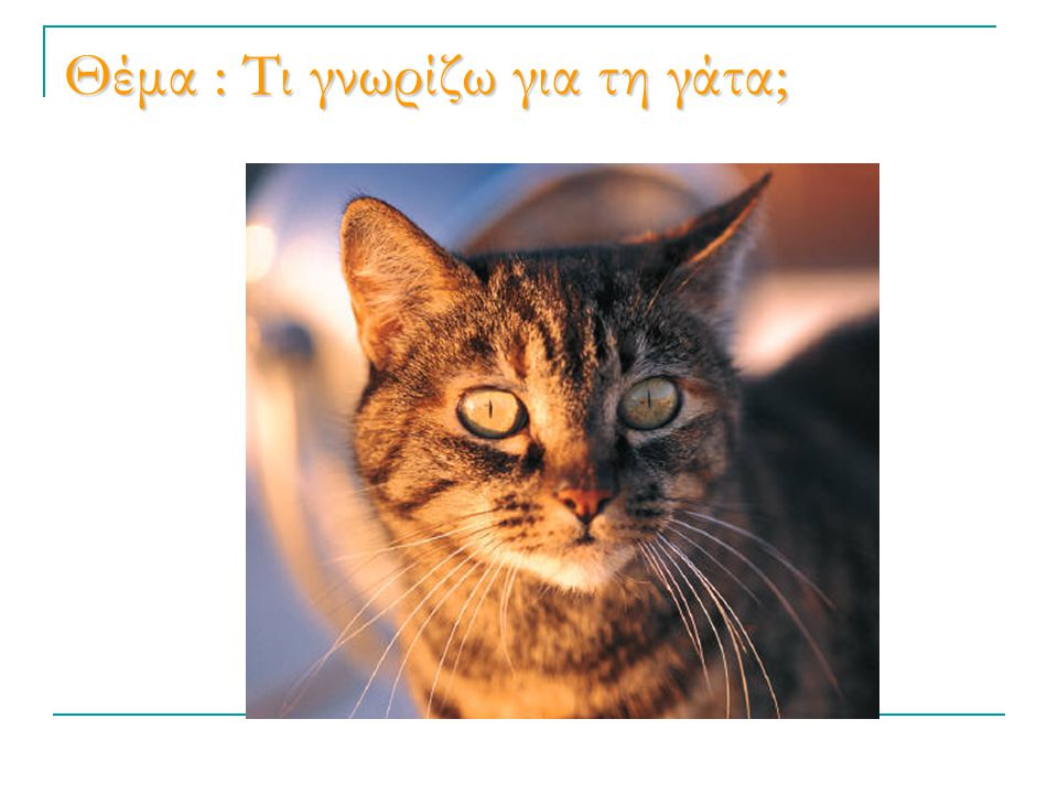 Θέμα : Τι γνωρίζω για τη γάτα;