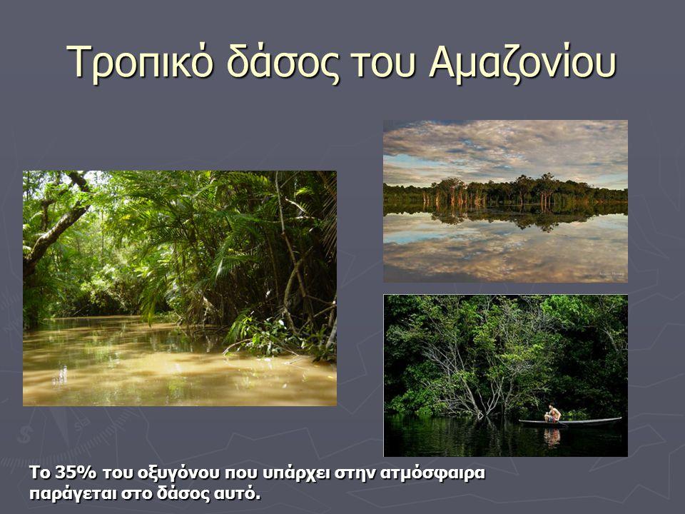 Τροπικό δάσος του Αμαζονίου