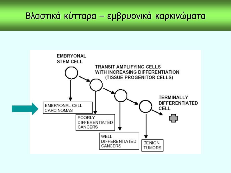 Βλαστικά κύτταρα – εμβρυονικά καρκινώματα