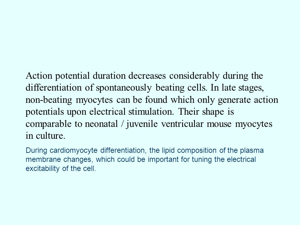 Action potential duration decreases considerably during the differentiation of spontaneously beating cells. In late stages, non-beating myocytes can be found which only generate action potentials upon electrical stimulation. Their shape is comparable to neonatal / juvenile ventricular mouse myocytes in culture.