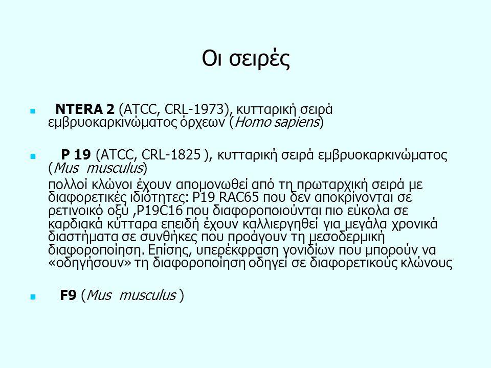 Οι σειρές NTERA 2 (ATCC, CRL-1973), κυτταρική σειρά εμβρυοκαρκινώματος όρχεων (Homo sapiens)