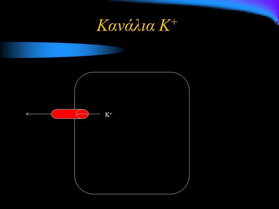 Κανάλια K+ K+
