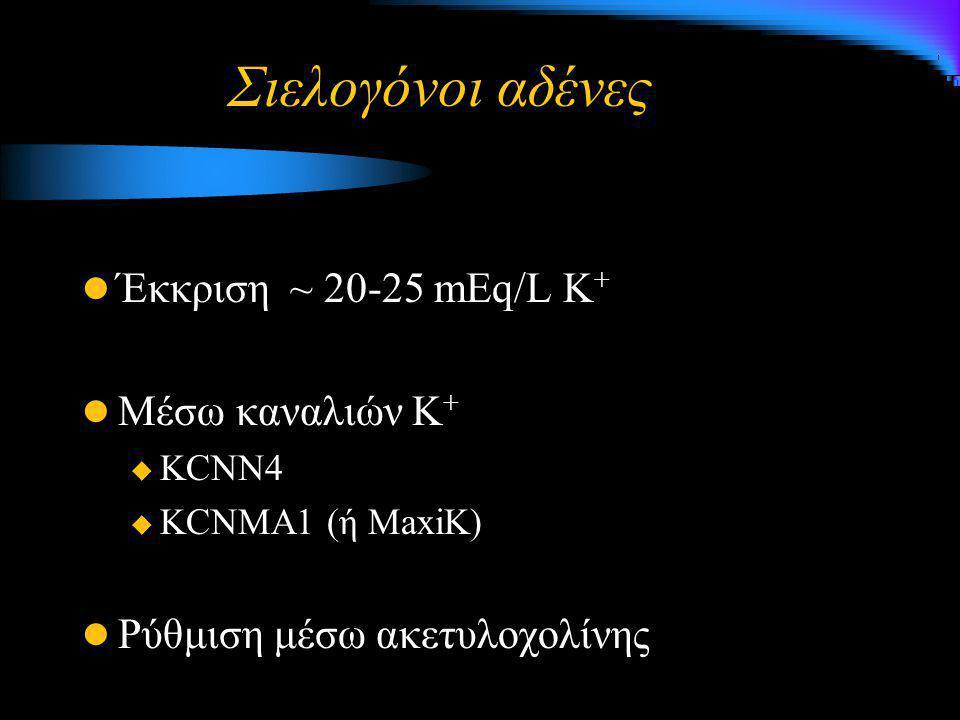Σιελογόνοι αδένες Έκκριση ~ 20-25 mEq/L Κ+ Μέσω καναλιών Κ+