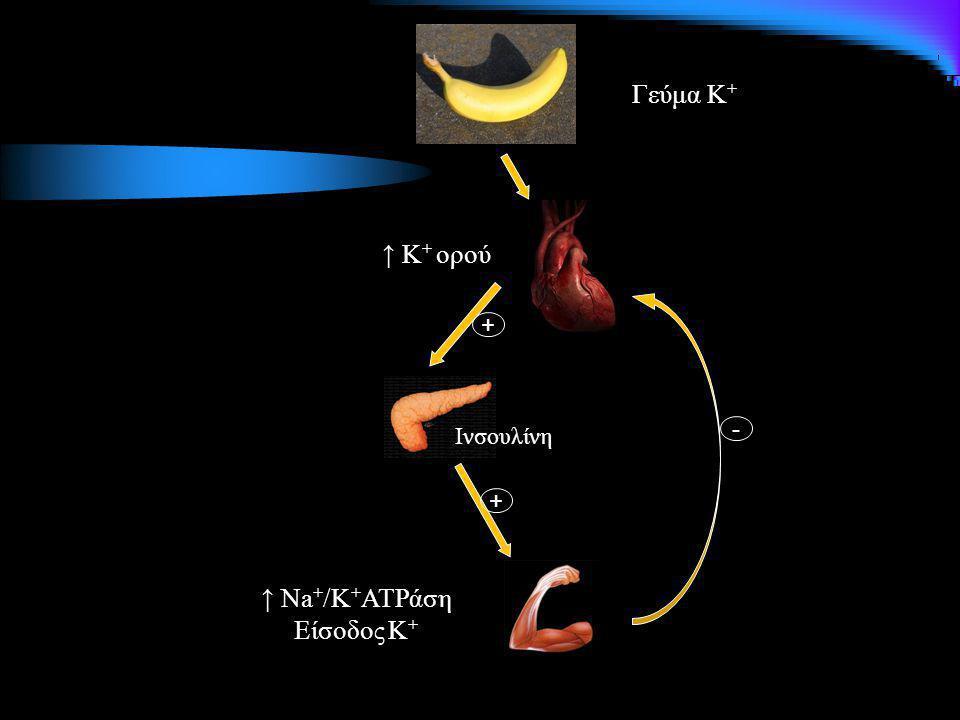 Γεύμα Κ+ ↑ Κ+ ορού + Ινσουλίνη - + ↑ Na+/K+ATPάση Είσοδος Κ+