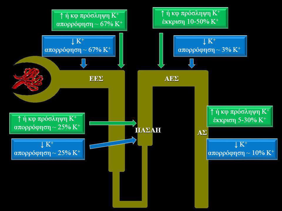 ↑ ή κφ πρόσληψη Κ+ έκκριση 10-50% Κ+ ↑ ή κφ πρόσληψη Κ+ απορρόφηση ~ 67% Κ+ ↓ Κ+ απορρόφηση ~ 67% Κ+