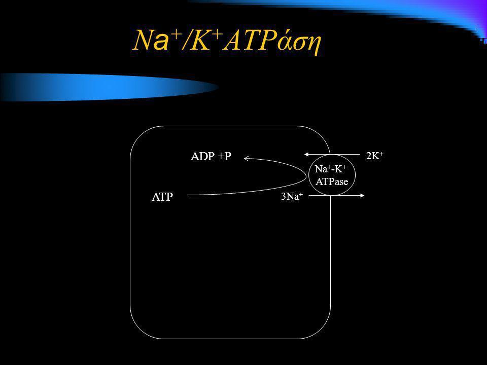 Na+/K+ATPάση ADP +P 2K+ Na+-K+ ATPase ATP 3Na+