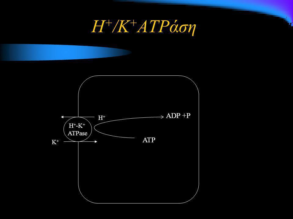 Η+/K+ATPάση ADP +P H+ H+-K+ ATPase ATP K+