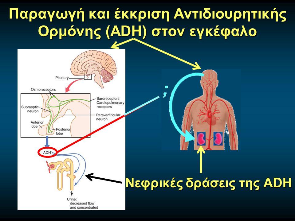 Παραγωγή και έκκριση Αντιδιουρητικής Oρμόνης (ADH) στον εγκέφαλο