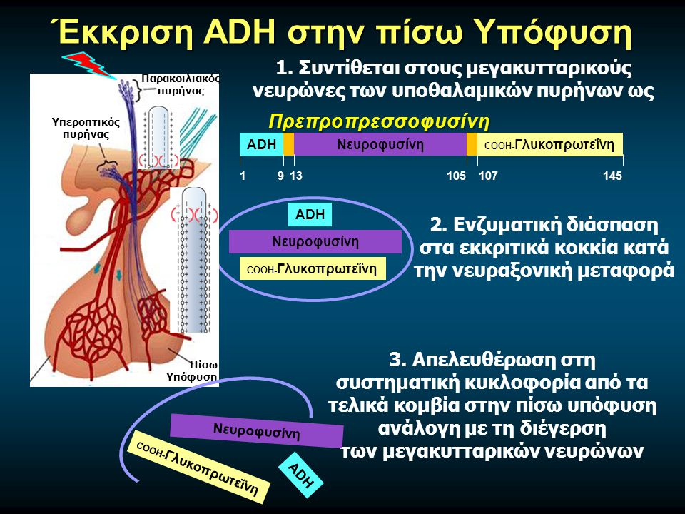 Έκκριση ADH στην πίσω Υπόφυση