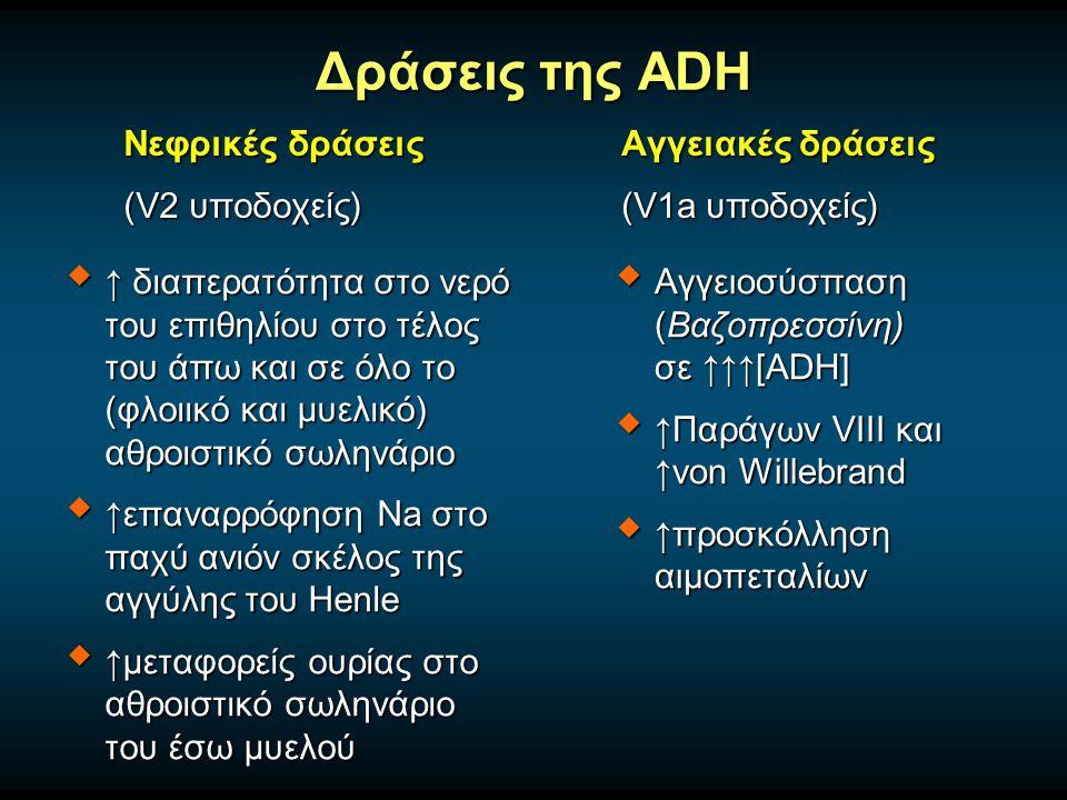 Δράσεις της ADH Νεφρικές δράσεις (V2 υποδοχείς) Αγγειακές δράσεις